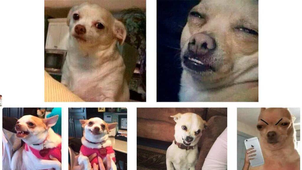 Mejores memes del Perro enojado