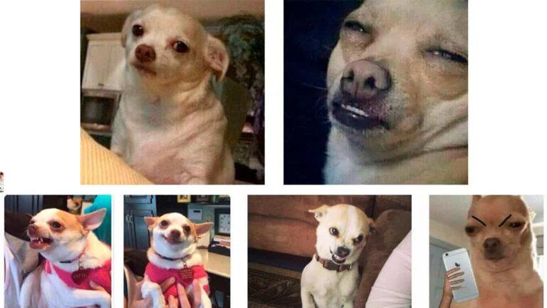 Los mejores memes del Perro Enojado | Edición: varios animalitos